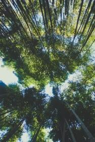 Monkey+Bamboo09