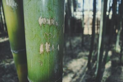 Monkey+Bamboo14