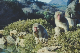 Monkey+Bamboo23