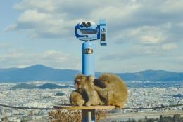 Monkey+Bamboo25