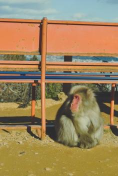 Monkey+Bamboo28