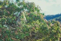 Monkey+Bamboo31