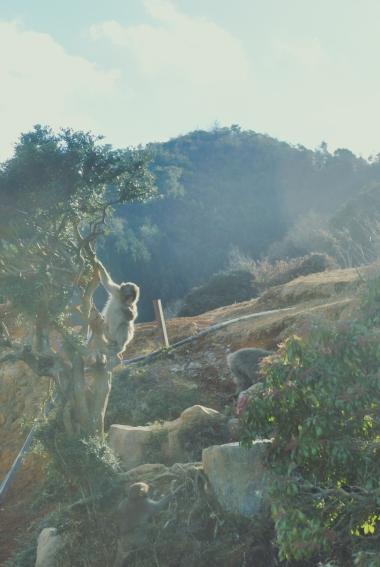 Monkey+Bamboo36