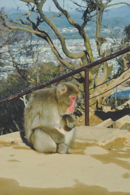 Monkey+Bamboo37