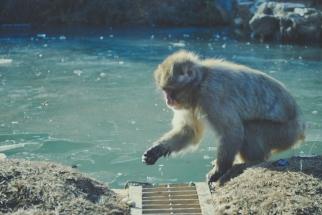 Monkey+Bamboo38