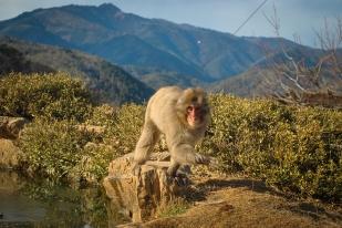 Monkey+Bamboo41
