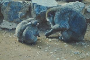 Monkey+Bamboo45