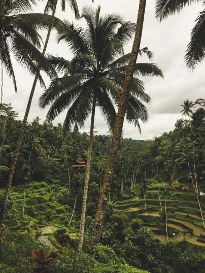 Bali25