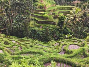 Bali27