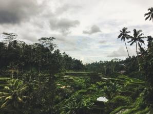 Bali29