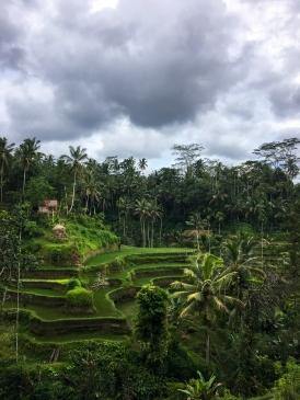 Bali30