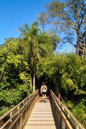 Iguazu13