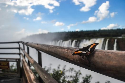 Iguazu44