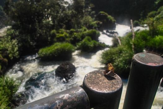 Iguazu69